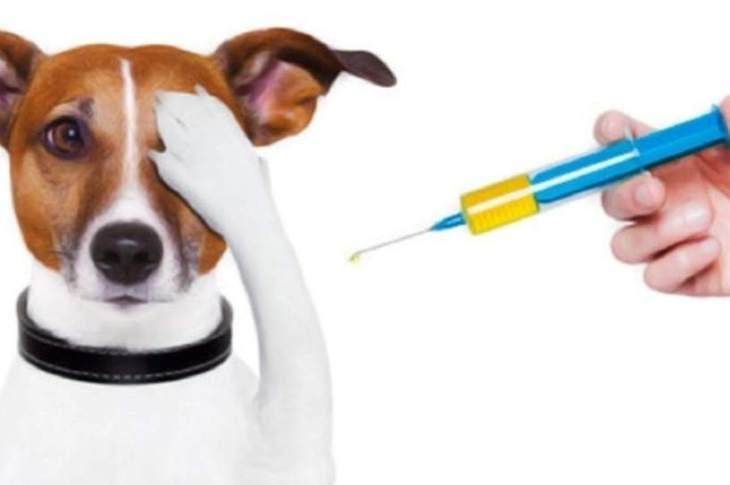 La Granja: inició la campaña de vacunación antirrábica 1