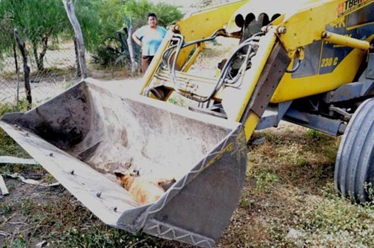 Matanza de perros en Deán Funes: comenzó el juicio 8