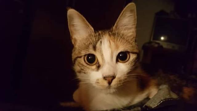 8 de agosto, Día Internacional del Gato 9