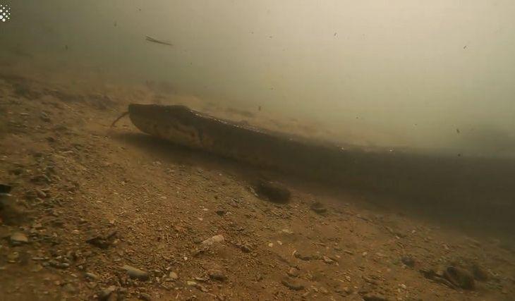 Brasil: buzos se topan con Anaconda de 7 metros 1