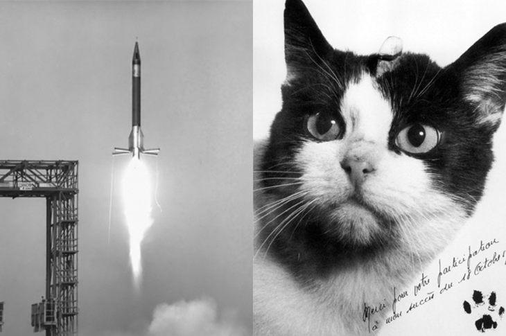 Efeméride curiosa: un día como hoy, Francia lanzaba una gata al espacio 4
