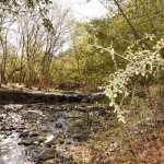 Se aprobó la Ordenanza de Patrimonio para la Reserva de Villa Allende
