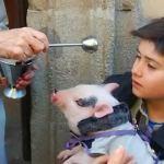 Los animales visitan a su patrón, San Antonio Abad