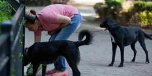 Excrementos de perros en las calles