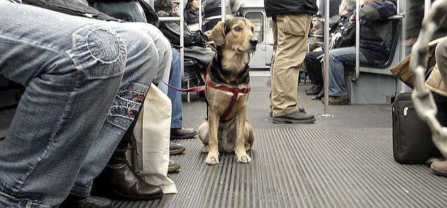 Perro en el metro de Madrid