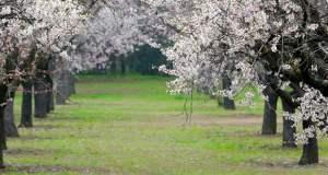 Jardines Quinta de los Molinos