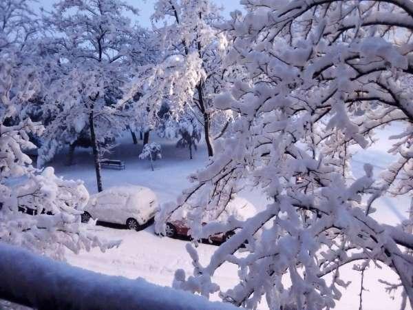 nieve en madrid 2021 árboles y parque