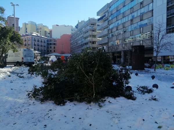 nieve madrid árbol caído