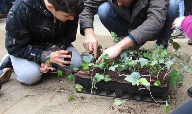Proyecto transformar patios en zonas verdes