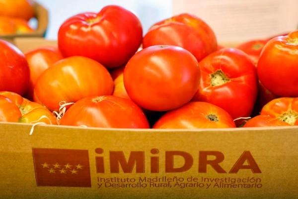 Primera Semana Tomate Madrid