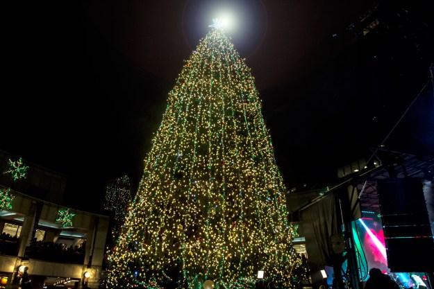 El pino natural de 85 pies de altura está iluminado por más de 30.000 luces. Foto: Ciro Valiente.
