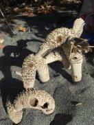 Tallado natural en un tronco muerto. Baracoa - Cuba.