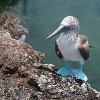 Galápagos para mochileros. Consejos prácticos para un viaje por libre