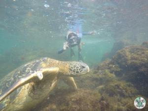 Foto de Gaby saludando a una tortuga marina elmundoenlamochila.com