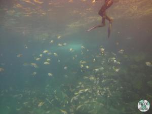 Foto de Peces bajo mis pies submarinismo