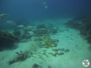 Foto de peces tropicales de galápagos