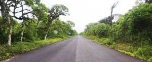 bosque-galapagos-elmundoenlamochila-penci