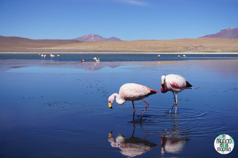 salar-uyuni-reserva-eduardo-avaroa-flamencos