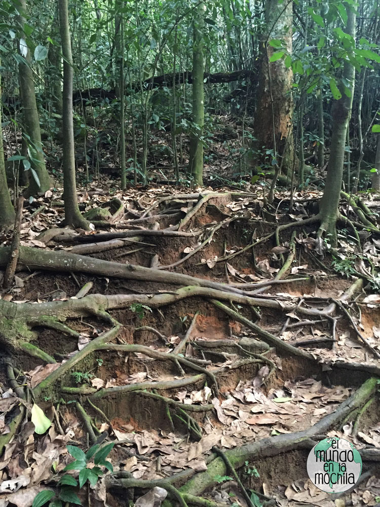 Escalones naturales ilha grande