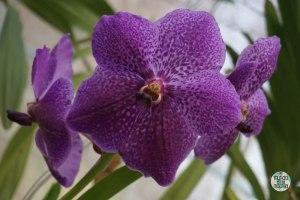 Orquídeas del Jardín Botánico de Rio 3