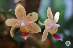 Orquídeas del Jardín Botánico de Rio 5