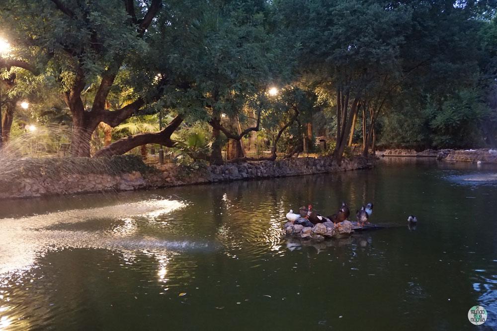 Animales en el estanque del Parque María Luisa en Sevilla
