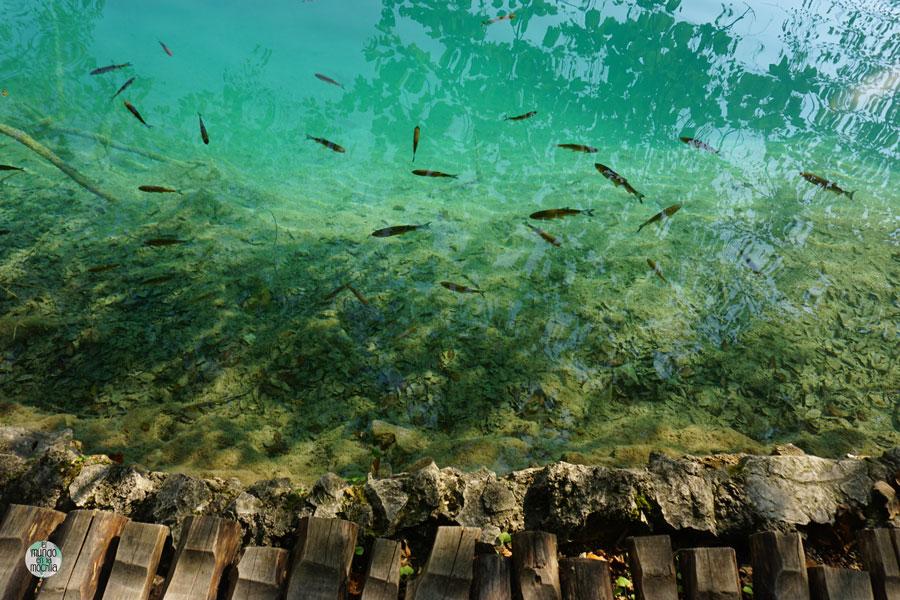 Peces nadando en las aguas turquesas del Parque Nacional de los Lagos de Plitvice