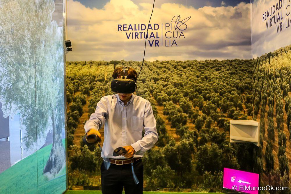 Recogida de aceitunas de forma virtual en Picualia (Bailén).