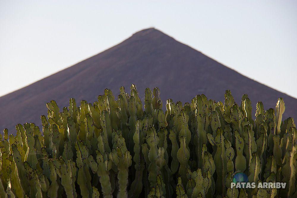 Cactus Volcán Lanzarote