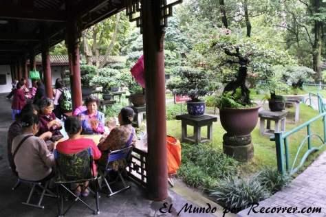 Locales jugando a las cartas alrededor de bonsáis