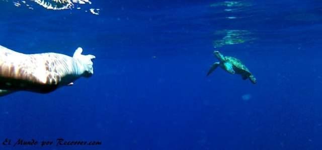 Señalando una pequeña tortuga marina