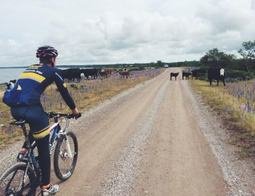 Share the road - kossor & kalvar