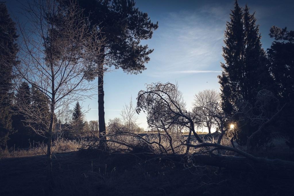 kvarnskogen_alboga_december_2106-16