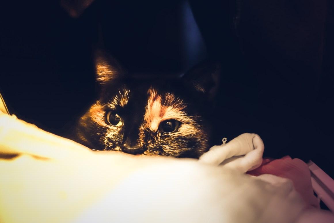 Katten Pixel
