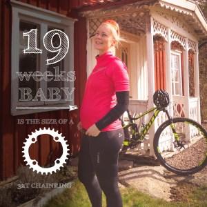 Gravid vecka 19