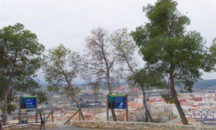 Los pinos de la comarca, amenazados por escolítidos