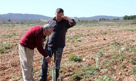 La finca experimental 'Las Nogueras' de Caravaca incorpora nuevos cultivos alternativos a los tradicionales de la comarca