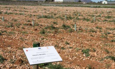 El Partido Popular de Caravaca impulsará el cultivo de nuevas variedades agrícolas y la mejora de los seguros agrarios