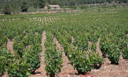 Bullas en la III Edición de los Premios Nacionales de Enoturismo «Rutas del Vino de España» convocados por ACEVIN