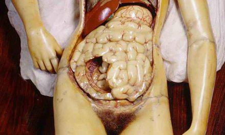 Ipsum del te nosce: anatomía; la mejor lección de arte