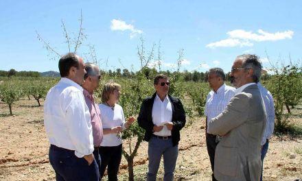 La tormenta de granizo deja importantes daños en unas 6 mil hectáreas de cultivos de Caravaca