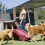 El Ayuntamiento de Calasparra reitera su compromiso con la creación de un albergue comarcal para animales abandonados