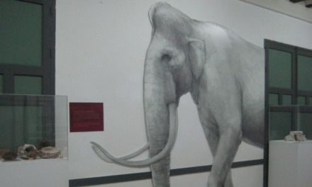 La exposición sobre la Cueva Victoria llega al Museo El Cigarralejo de Mula
