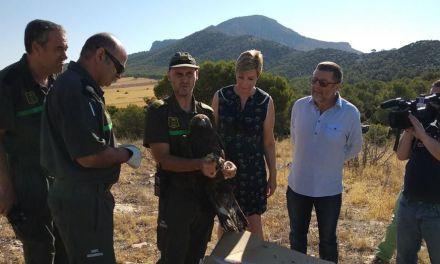 Liberan un Águila Real, que sufrió una electrocución, tras su tratamiento en el Centro de Recuperación de Fauna silvestre 'El Valle'