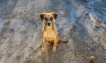Las Concejalías de Sanidad y Medio Ambiente de Cehegín hacen un llamamiento para concienciar sobre la adopción de mascotas
