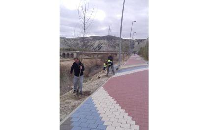 Plantan nuevo arbolado en Albudeite en el Paseo junto al río