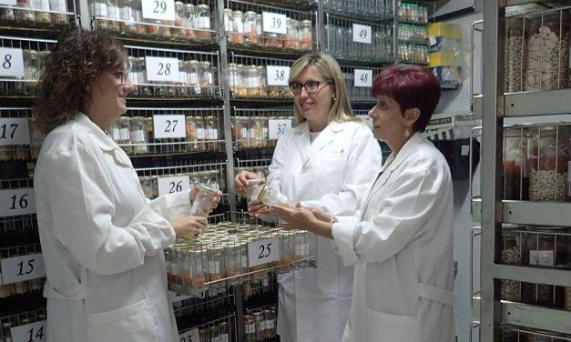 """""""Mi interés por la investigación creció al ir constatando la importancia y la trascendencia que tiene"""", la caravaqueña Elena Sánchez, responsable de la colección de Hortícolas del BAGERIM"""