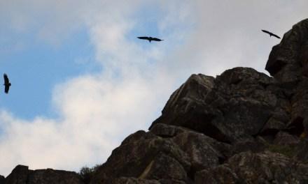Ganar Moratalla-IU lleva al pleno la defensa del mayor espacio natural de protección de la fauna de la región