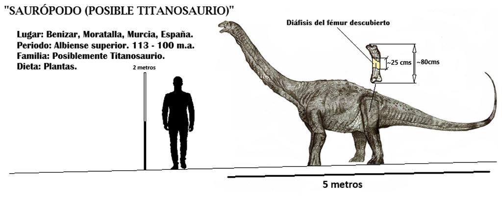 Analizado el primer registro fósil de dinosaurio en el Noroeste de la Región de Murcia