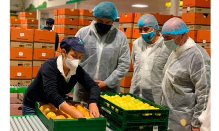 El consejero de Empleo visita tres cooperativas en Bullas y Mula y resalta «el importante papel del sector agrario durante la pandemia, que ha soportado el empleo y ha incrementado las contrataciones»
